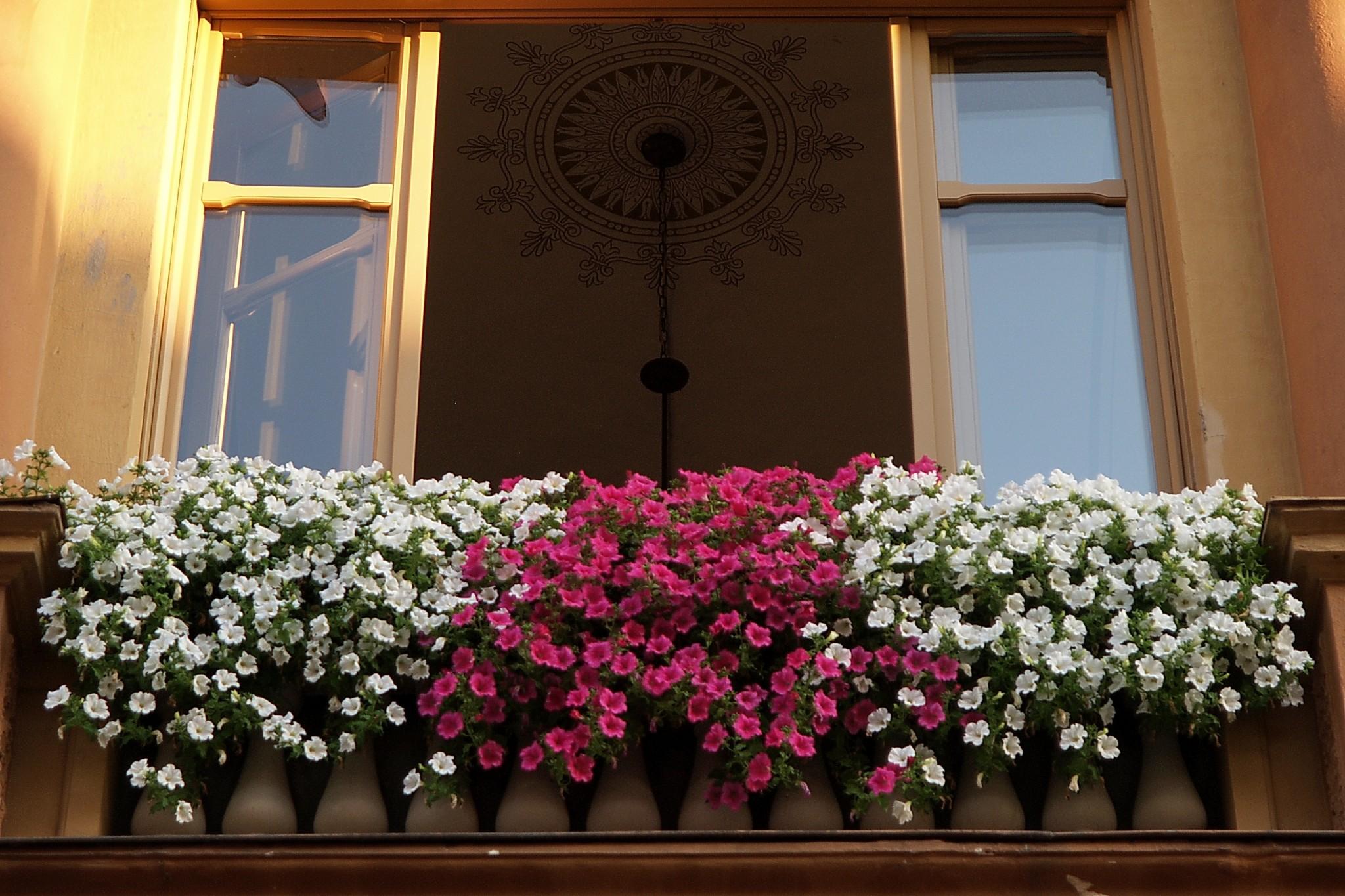 Balconi fioriti  2006 564ENTE